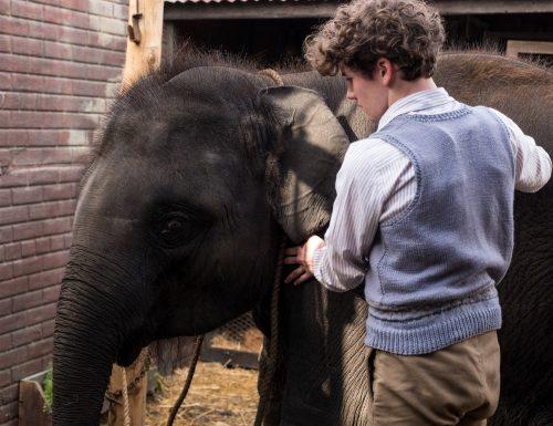 CinemaTivu · Zoo: Un amico da salvare (Uk, Irl 2018), con Art Parkinson, diretto da  Colin McIvor, in onda in prima visione, su Canale5