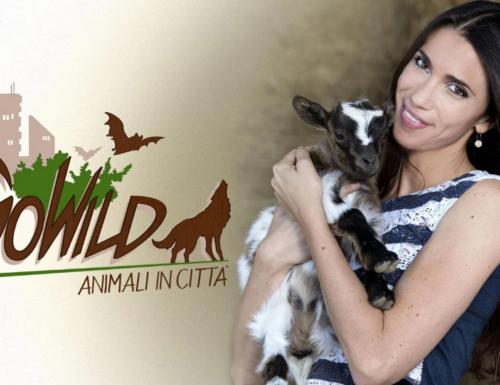 Su #RaiPlay arriva GoWild – Animali in città, una speciale serie tv live action sul mondo animale